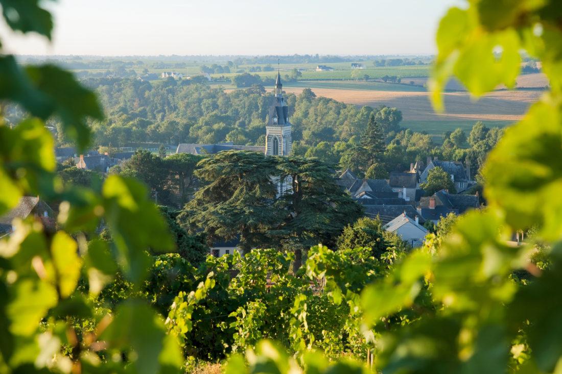 Vigne à Chaudefond sur Layon - Anjou